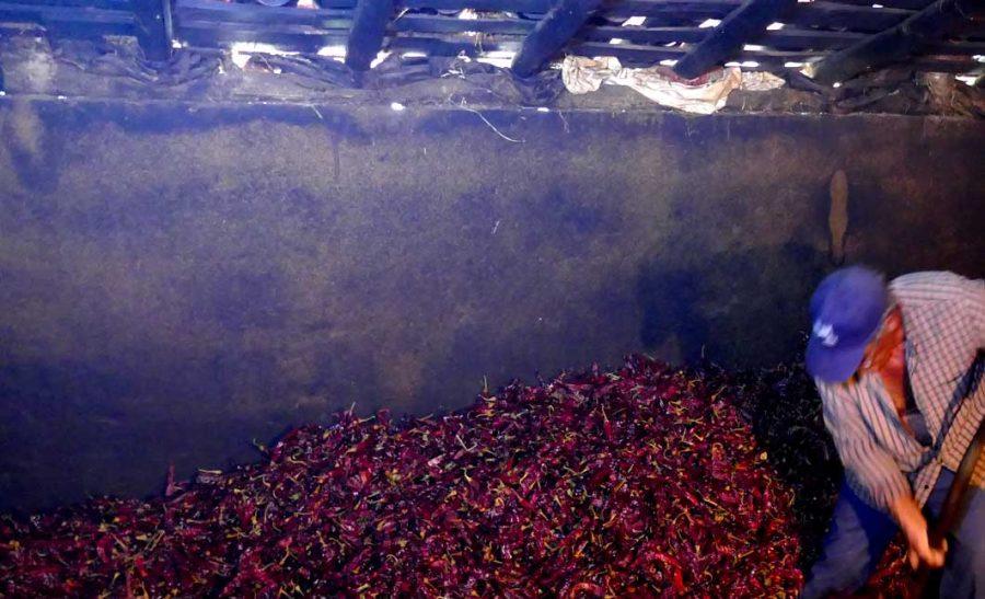 secado de pimientos
